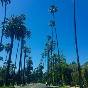 bev hills tall palms